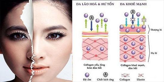 Collagen-dong-vai-tro-gi-voi-da